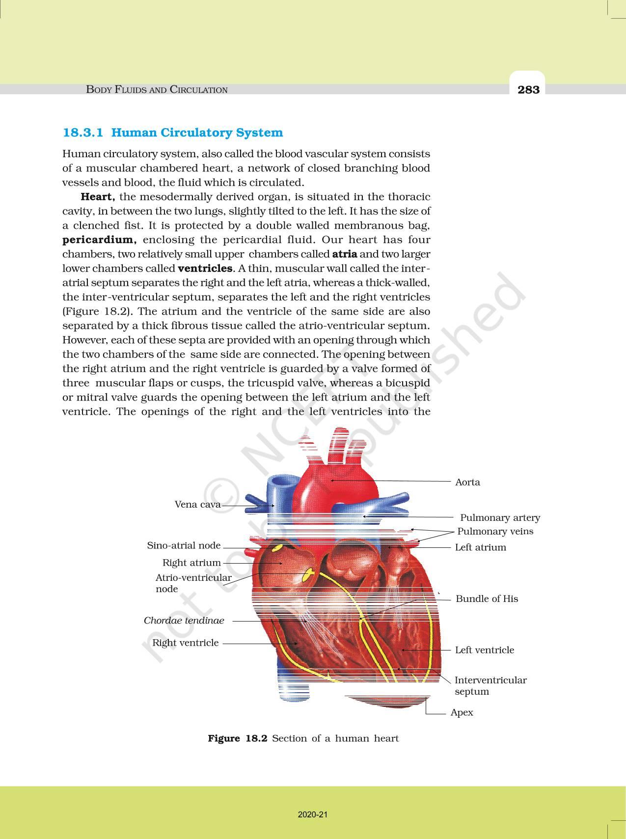 Body Fluids And Circulation - NCERT Book of Class 11 Biology